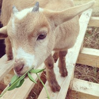Photo taken at The Belmont Goats by Kate B. on 6/14/2013