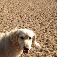 1/6/2013에 Noah B.님이 Pier 6 Dog Run에서 찍은 사진
