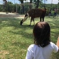 6/5/2017 tarihinde B O.ziyaretçi tarafından Piknik Park Polonezköy Petting Zoo'de çekilen fotoğraf