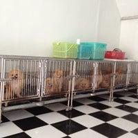 Photo taken at สันติฟาร์ม Dog Market by Chalee k. on 10/1/2012