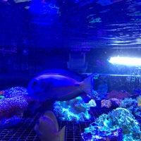 Photo taken at Aquariums Raging Reef by Sylvie D. on 1/5/2014