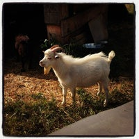 Photo taken at The Belmont Goats by Shannon F. on 5/12/2013