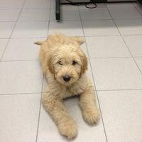 Photo taken at Shandon-Wood Animal Clinic by Deborah K. on 12/24/2012