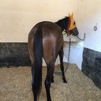6/24/2016 tarihinde Doğan Ö.ziyaretçi tarafından Yarış Atları Hastanesi'de çekilen fotoğraf