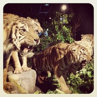 Photo taken at Muséum d'Histoire Naturelle by Jerome N. on 1/4/2013