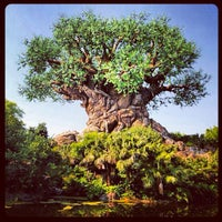 Photo taken at Disney's Animal Kingdom by Fabrício S. on 7/2/2013