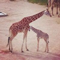 Photo taken at Prague Zoo by Rane M. on 6/23/2013