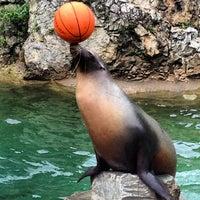 Das Foto wurde bei Kölner Zoo von Two Beers am 9/13/2013 aufgenommen