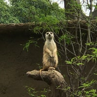 Photo taken at Meerkat Exhibit by Phillip C. on 6/3/2017