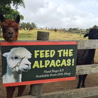 Mountview alpaca farm caf for Alpaca view farm cuisine