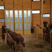 Photo taken at Giraffen by Frank d. on 1/1/2013