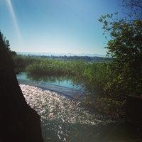 Photo taken at Naturschutzgebiet Unterer Greifensee by Peter Z. on 8/1/2013