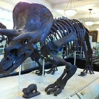 Photo taken at David H. Koch Dinosaur Wing by Reinaldo D. on 11/18/2012