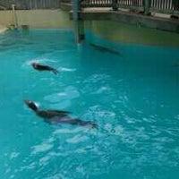 """4/27/2013 tarihinde Rob """"Gringobaby"""" M.ziyaretçi tarafından California Sea Lions Pool'de çekilen fotoğraf"""