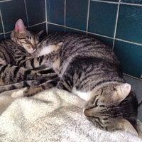 Photo taken at Hawaiian Humane Society by Aaron L. on 2/12/2012