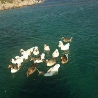 7/20/2013 tarihinde Suna A.ziyaretçi tarafından Akvaryum Koyu'de çekilen fotoğraf