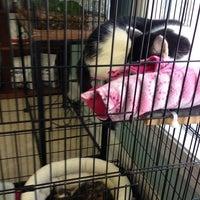 Photo taken at Shandon-Wood Animal Clinic by Anastasia Z. on 1/24/2013