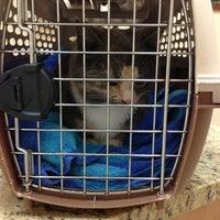 Photo taken at Shandon-Wood Animal Clinic by Anastasia Z. on 2/11/2013