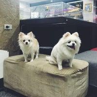 Photo taken at Thonglor Pet Hospital by zanyasan on 8/3/2016