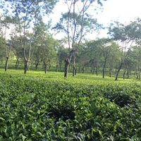 Photo taken at Kebun Teh Wonosari by Allen F. on 7/14/2016