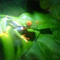Photo taken at Frog Pond of Monteverde by Jasper V. on 2/26/2013