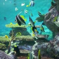 Photo taken at COEX Aquarium by Minhee K. on 7/28/2013