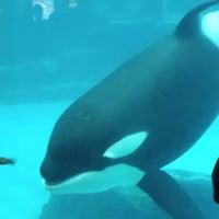 Photo taken at Port of Nagoya Public Aquarium by 伊集院 龍. on 5/4/2015
