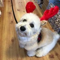 12/3/2017 tarihinde Lana C.ziyaretçi tarafından Noe Valley Pet Company'de çekilen fotoğraf