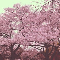 Photo taken at Shinjuku Gyoen by ykr_gnn on 3/23/2013