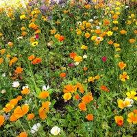 Photo taken at Cambridge University Botanic Gardens by Thoranin T. on 7/13/2013