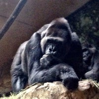 Photo taken at World of Primates at Ft. Worth Zoo by  ℋumorous on 8/7/2014