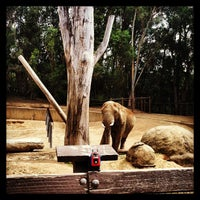 Photo taken at African Elephants by Edward E. on 4/25/2013