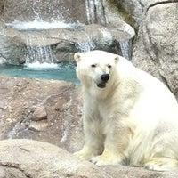 6/9/2013 tarihinde Chuck W.ziyaretçi tarafından Indianapolis Zoo'de çekilen fotoğraf