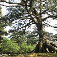 Photo taken at Neagarinomatsu Pine by YUKI C. on 5/21/2017