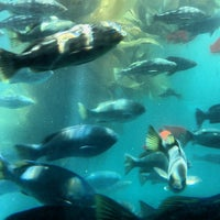 Photo taken at Catalina Semi-submersible Undersea Tour by Richard A. on 4/10/2013