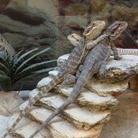 Photo taken at Petco by Kelly P. on 4/23/2013