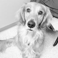 Photo taken at VCA Animal Care Hospital by Jon C. on 1/19/2013