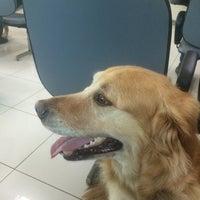 Photo taken at Hospital Veterinário 24h Cães e Gatos by Daniel P. on 7/31/2016
