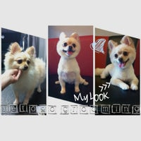 Photo taken at Letoro Grooming by Squido N. on 7/14/2014