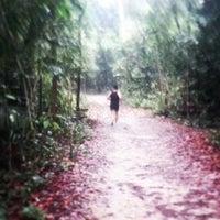 Das Foto wurde bei MacRitchie Nature Trail von Christian Oliver C. am 5/11/2013 aufgenommen