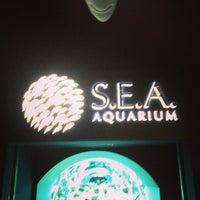 Photo taken at S.E.A. Aquarium by Dai D. on 3/16/2013