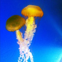 Photo taken at Aquarium of The Pacific by Chris B. on 12/3/2012