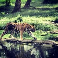 Photo taken at Nehru Zoological Park by Pratap K. on 10/13/2013