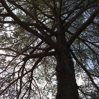 Photo taken at Liberty Tree by Nina L. on 1/29/2013