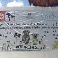 Photo taken at Centro De Acopio Animal by Nadia C. on 7/3/2013