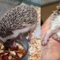 Photo taken at Jateng Landak Hedgehog Farm by Mii2 K. on 12/2/2012