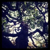 Снимок сделан в Sherwood Forest National Nature Reserve пользователем Bernard I. 10/19/2012