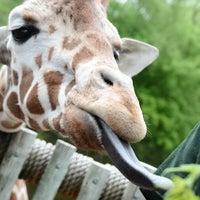 Photo taken at Minnesota Zoo by jeffachen on 5/25/2013