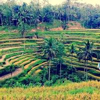 Снимок сделан в Tegallalang Rice Terraces пользователем Edward F. 10/25/2012
