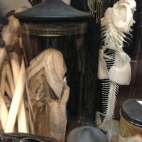 Photo taken at Obscura Antiques and Oddities by Susanna L. on 6/5/2013